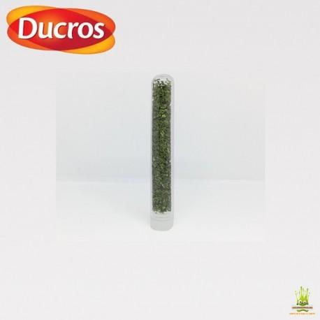 Tube Coriandre de France Ducros 1gr.